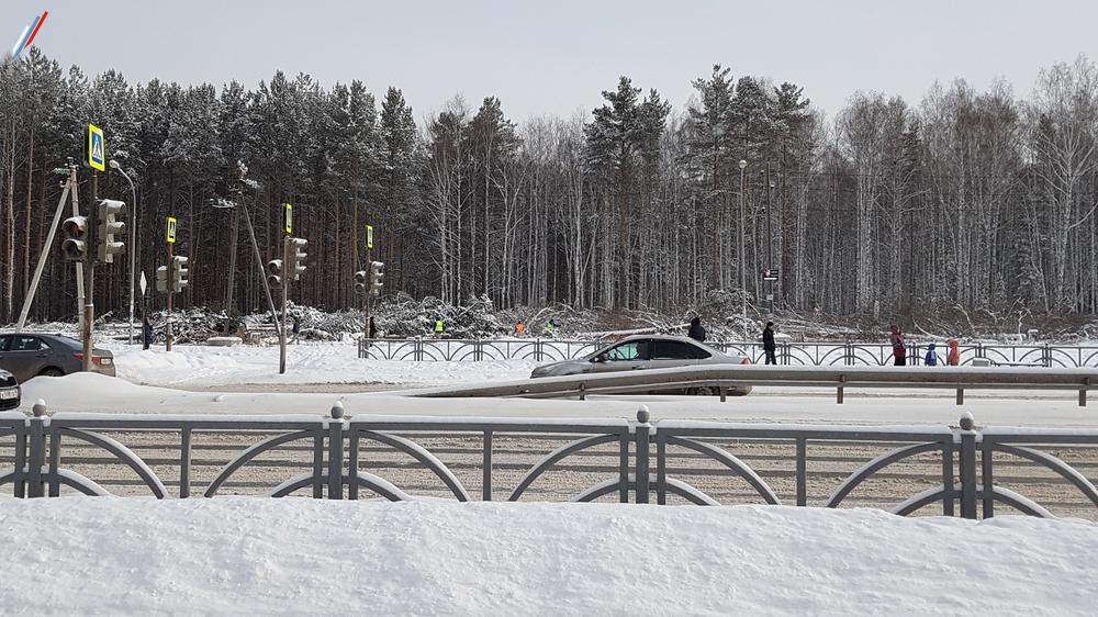 Вырубка Берёзовой рощи под застройку, Екатеринбург, март, 2018г.